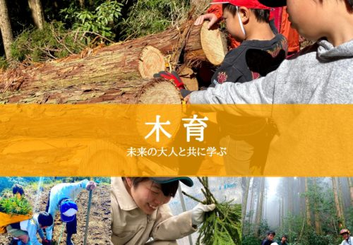 SDGs木育